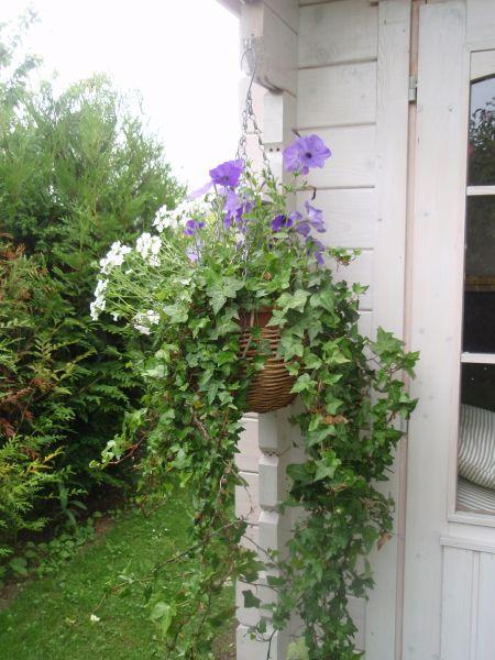 jardinage0011.jpg