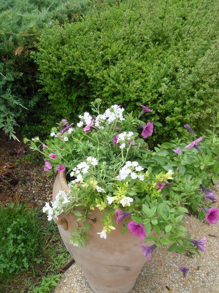 jardinage0021.jpg